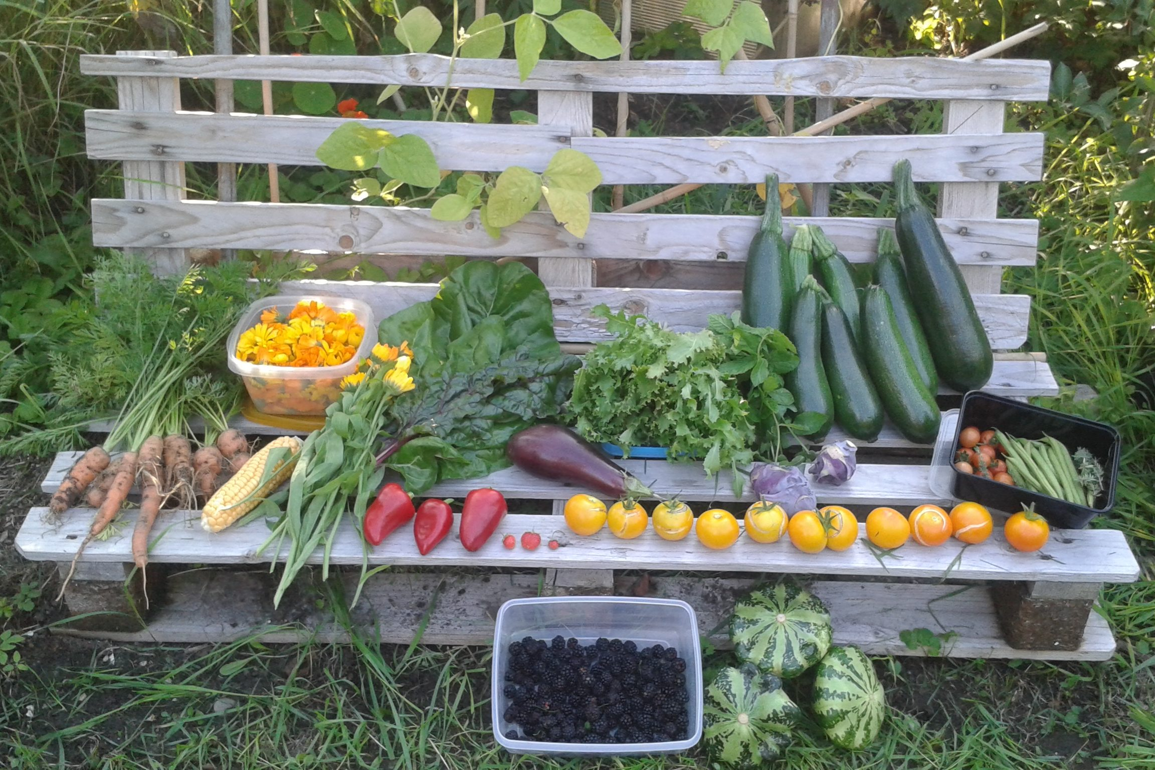 Belated but beloved foods (and harvest!)