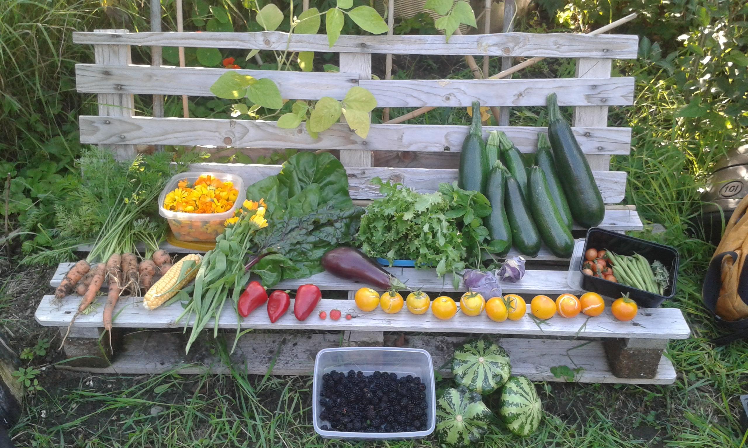 Belated but beloved foods (and harvest!)